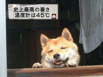 柴犬、秋田犬画像スレ-078
