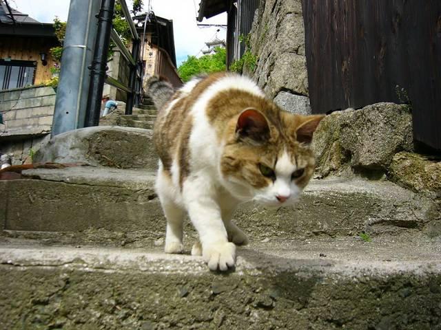 カッコいい猫の画像-144_3