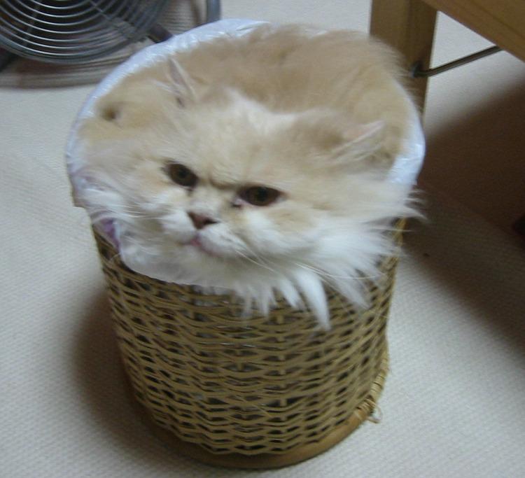 猫が袋に入ってる-079