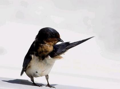 鳥の画像ください-037