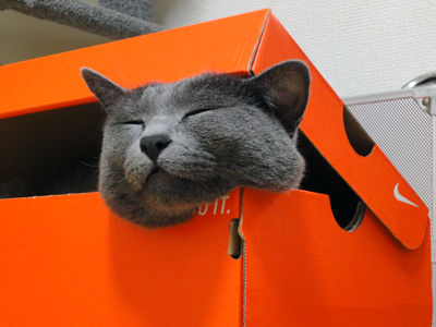猫が袋に入ってる-084