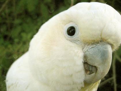 鳥の画像ください-055