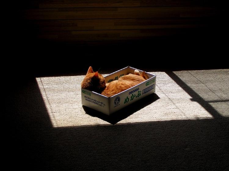 猫が袋に入ってる-125