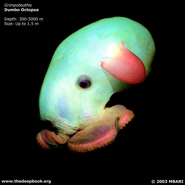 海に住む奇妙な生き物の画像-033_3
