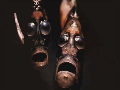 海に住む奇妙な生き物の画像-019