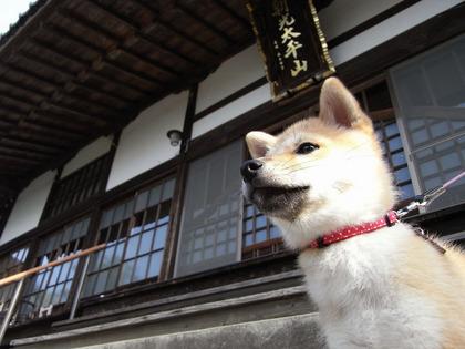 柴犬、秋田犬画像スレ-148