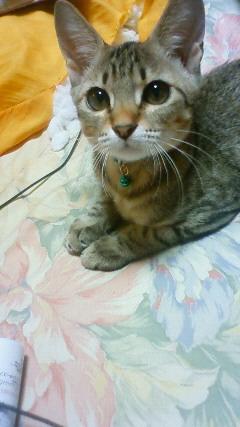 ネコの画像ください-004