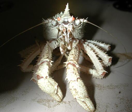 海に住む奇妙な生き物の画像-053_4