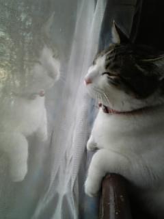 ネコの画像ください-032
