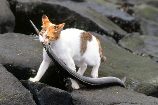 カッコいい猫の画像-124