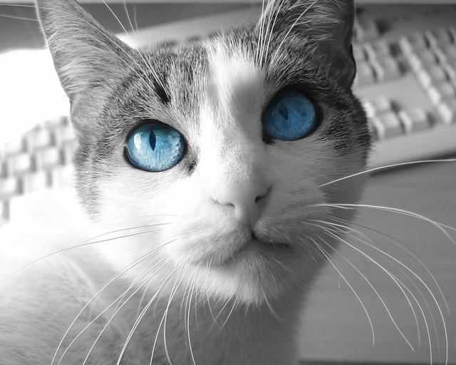 カッコいい猫の画像-109