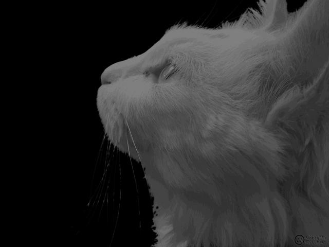 カッコいい猫の画像-081
