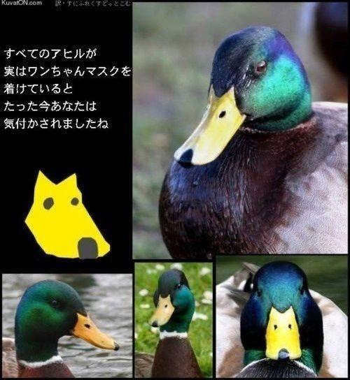 oKUTU