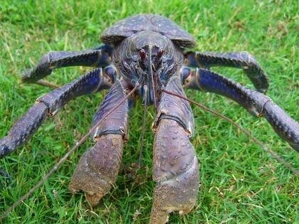 UMA・巨大生物・変な生物の画像くれ-078