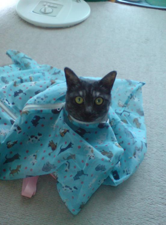 猫が袋に入ってる-003