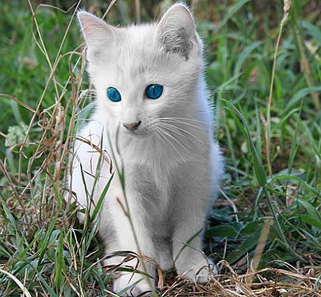 カッコいい猫の画像-095