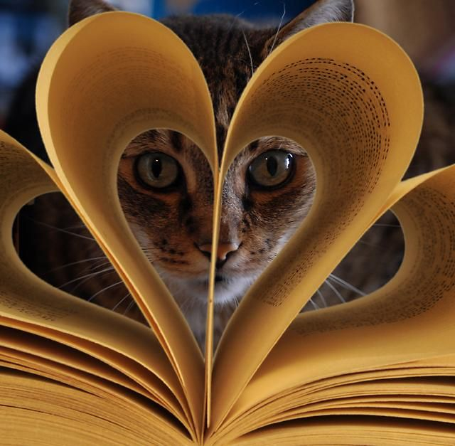 カッコいい猫の画像-097
