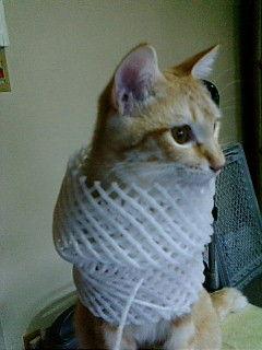猫が袋に入ってる-014