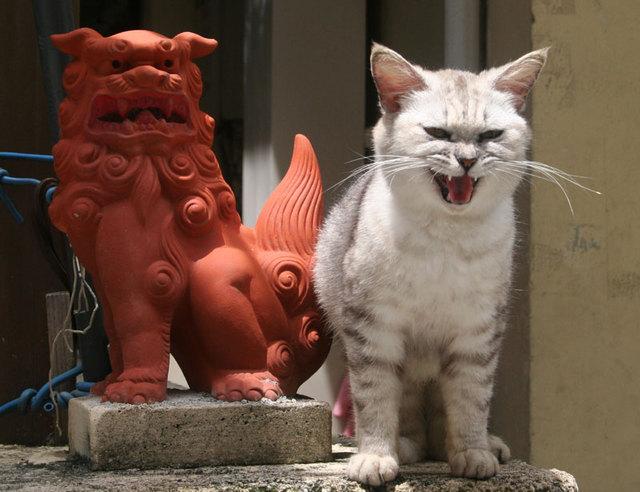 カッコいい猫の画像-017