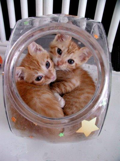 猫が袋に入ってる-123