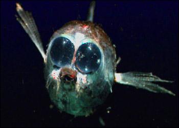 海に住む奇妙な生き物の画像-003_1