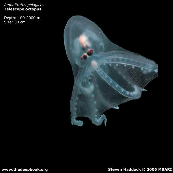 海に住む奇妙な生き物の画像-033_5