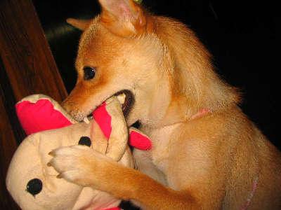 柴犬、秋田犬画像スレ-171
