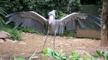 鳥の画像ください-043_2