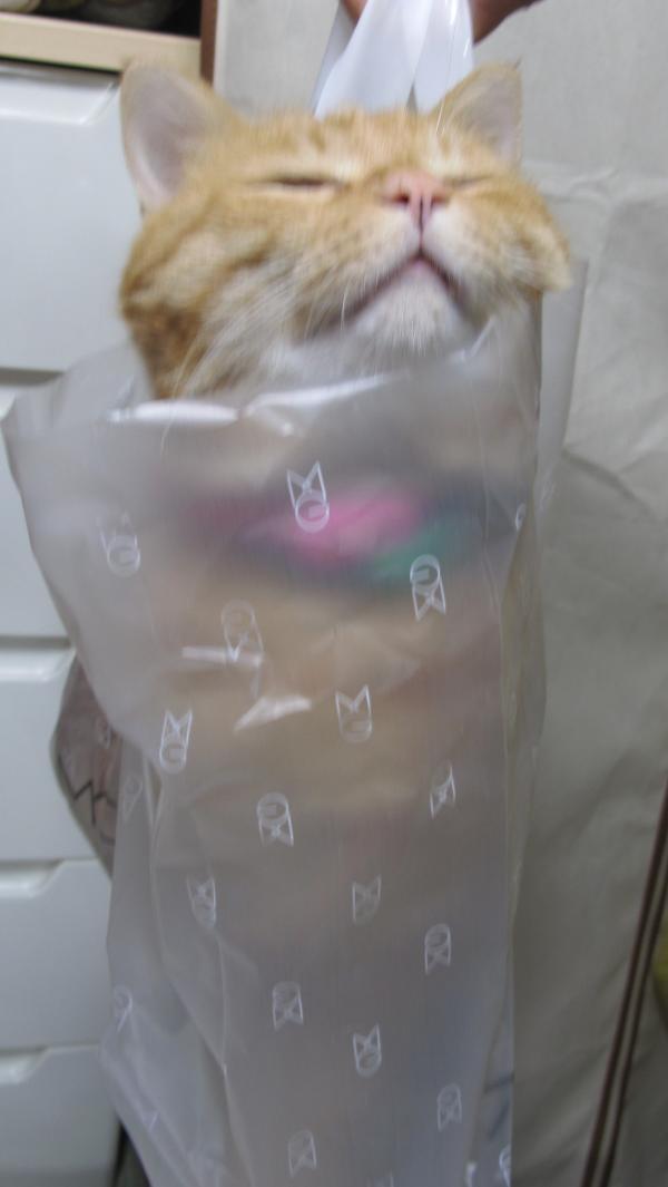 猫が袋に入ってる-066