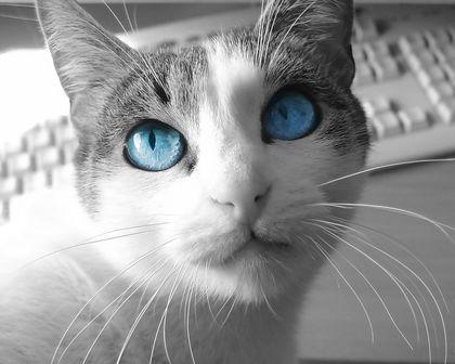 ネコの画像ください-090