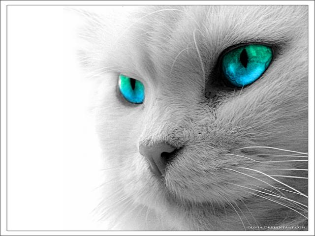 カッコいい猫の画像-113