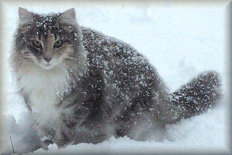 カッコいい猫の画像-121