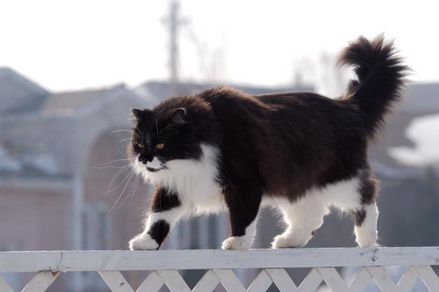 カッコいい猫の画像-153_1