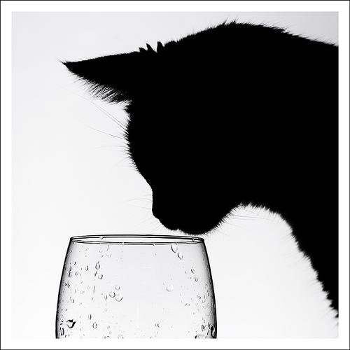カッコいい猫の画像-072