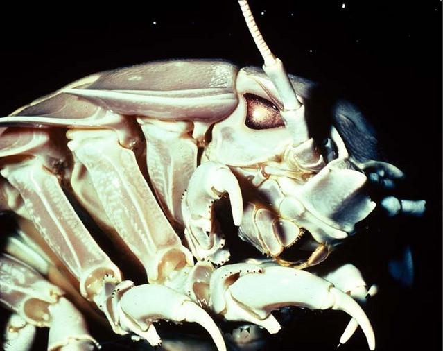 海に住む奇妙な生き物の画像-054_3