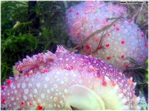 海に住む奇妙な生き物の画像-046_2