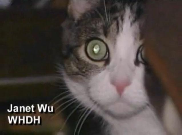 猫に陪審員として出廷要請-001