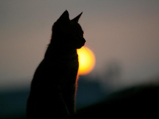 カッコいい猫の画像-114
