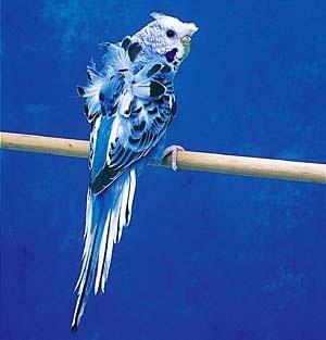 鳥の画像ください-027