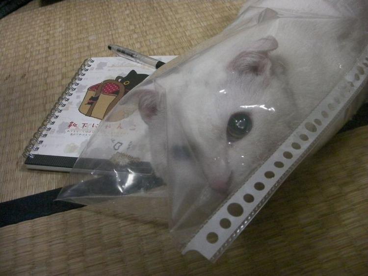猫が袋に入ってる-011