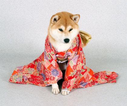 柴犬、秋田犬画像スレ-076