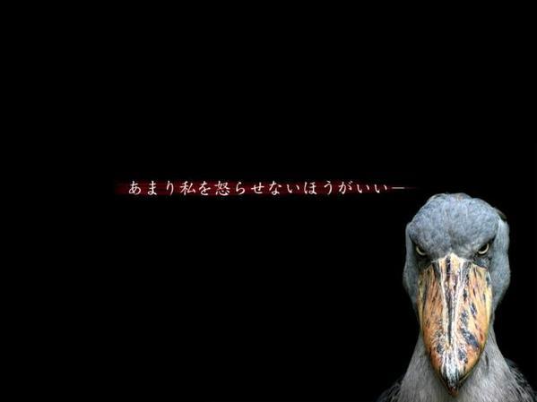 鳥の画像ください-70