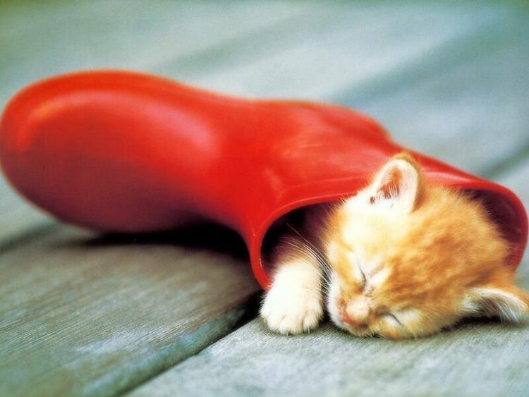 猫が袋に入ってる-081