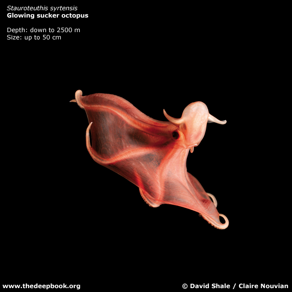 海に住む奇妙な生き物の画像-033_8