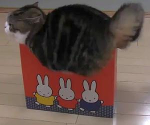 猫が袋に入ってる-141