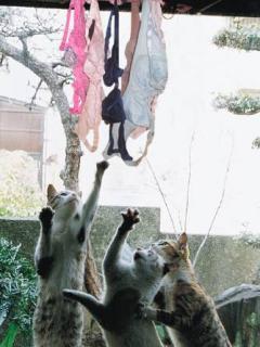 動物の笑える萌え画像-048_4