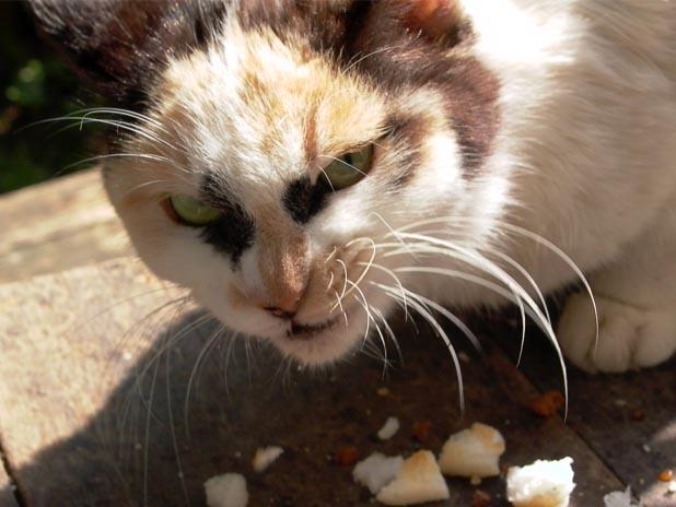 カッコいい猫の画像-138_2