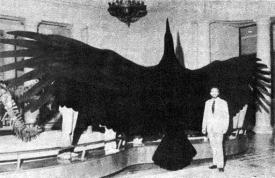巨大生物koe-067_2