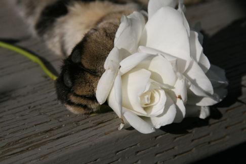 カッコいい猫の画像-190