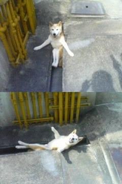 動物の笑える萌え画像-036_3